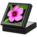 Glorious Violet Wood Sorrel Keepsake Box