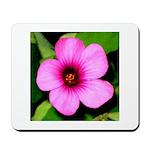 Glorious Violet Wood Sorrel Mousepad
