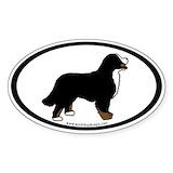 Bernese mountain dog Single