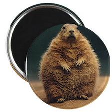 "Prairie Dog 2.25"" Magnet (100 pack)"