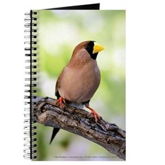 Masked Grass Finch Journal