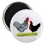 Black Sex-linked Chickens Magnet