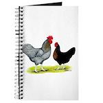 Black Sex-linked Chickens Journal