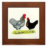 Black Sex-linked Chickens Framed Tile