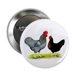 """Black Sex-linked Chickens 2.25"""" Button (10 pa"""