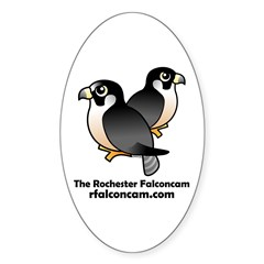 The Rochester Falconcam Oval Decal
