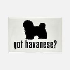 got havanese? Rectangle Magnet (10 pack)