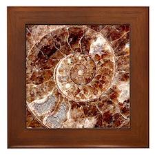 Shell Fossil Image Art Framed Tile