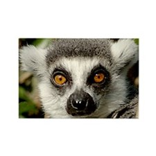 Lemur Rectangle Magnet
