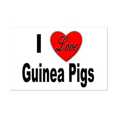 I Love Guinea Pigs Posters