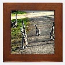 Lemur Framed Tile