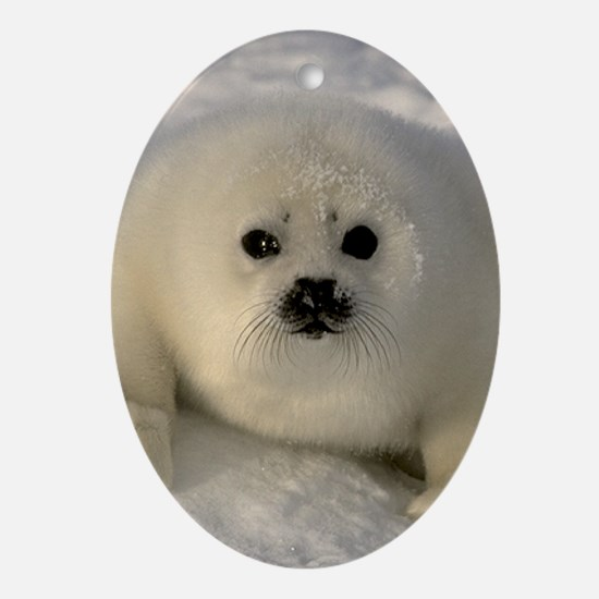 Baby Seal Ornament (Oval)