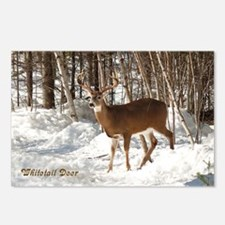 10 Point Buck Postcards (Package of 8)