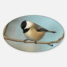 Chickadee Oval Decal