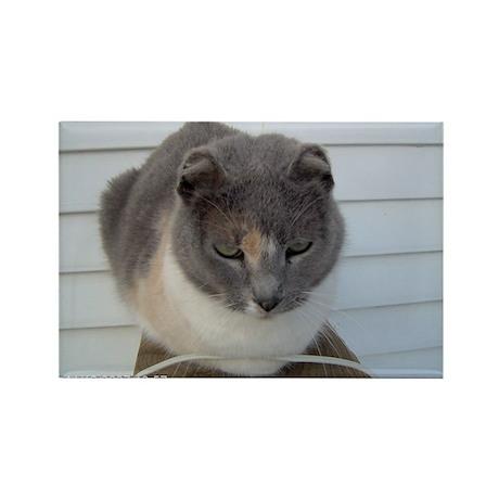Crunchy The Earlless Cat Rectangle Magnet