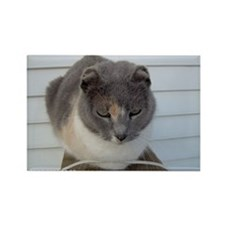Crunchy The Earless Cat Rectangle Magnet