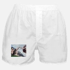 Weimaraner Creation Boxer Shorts