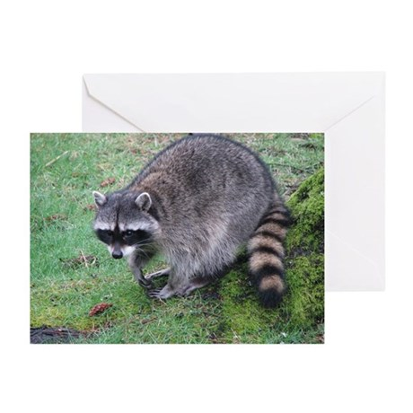 Helaine's Raccoon Greeting Cards (Pk of 20)