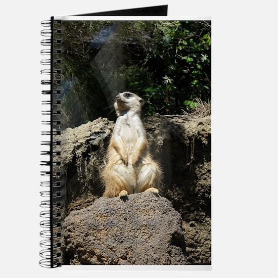 Meerkat Sentry Journal