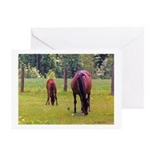 Horses and Bird Greeting Cards (Pk of 10)