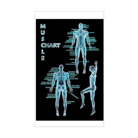 Muscle Chart Rectangle Sticker