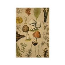 Antique Botanical Mushrooms Rectangle Magnet-10 pk