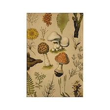 Antique Botanical--Mushrooms Rectangle Magnet