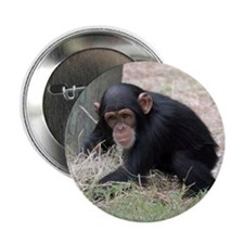 "Chimp baby 2.25"" Button"