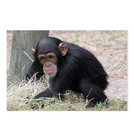 Chimp baby Postcards (Package of 8)