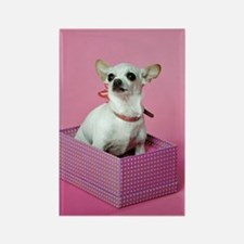 Birthday Chihuahua Rectangle Magnet