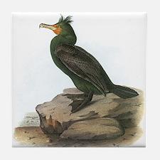Double-crested Cormorant Tile Coaster
