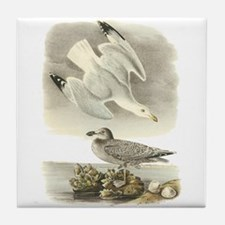 Herring Gull Tile Coaster
