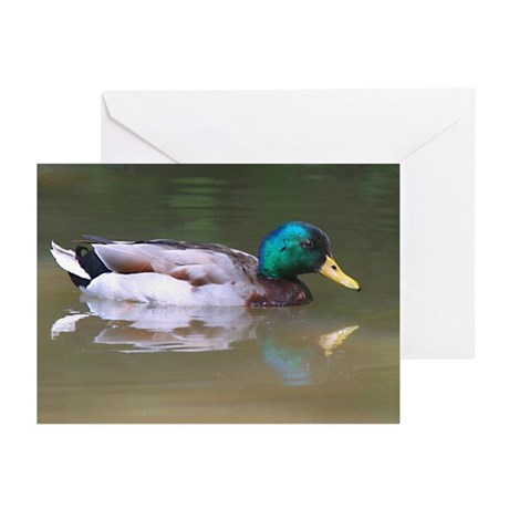 Duck Greeting Cards (Pk of 10)
