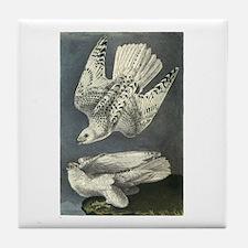Gyrfalcon art Tile Coaster