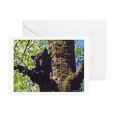 Black Bear Greeting Cards (Pk of 10)