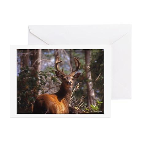 Blacktail Deer(sum) Greeting Cards (Pk of 10)