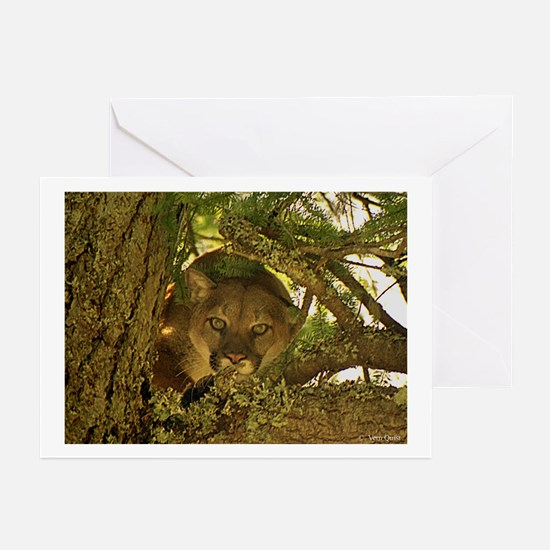 Cougar Stare Down Greeting Cards (Pk of 10)