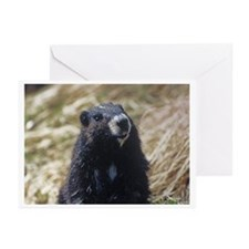 Vancouver Island Marmot Greeting Cards (Pack of 6)
