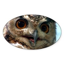 Mysterious Owl! Oval Decal