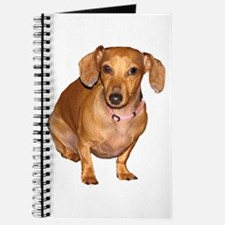 Helaine's Doxie Journal