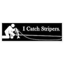 """""""I Catch Stripers"""" Bumper Bumper Stickers"""
