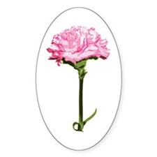 Pink Carnation Oval Decal