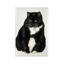 Helaine's Elvis the Cat Rectangle Magnet (100 pack