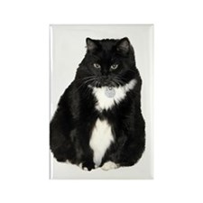 Helaine's Elvis the Cat Rectangle Magnet