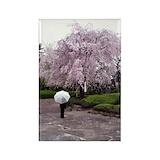 Cherry blossoms umbrella Single