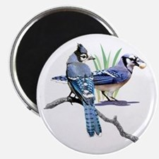 Blue Jay Magnet