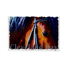 Cleveland Bay Horse Rectangle Magnet