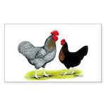 Black Sex-linked Chickens Rectangle Sticker 50 pk