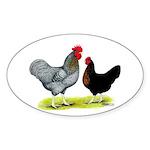 Black Sex-linked Chickens Oval Sticker (10 pk)