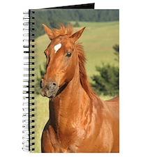 Aussie Stock Horse Journal